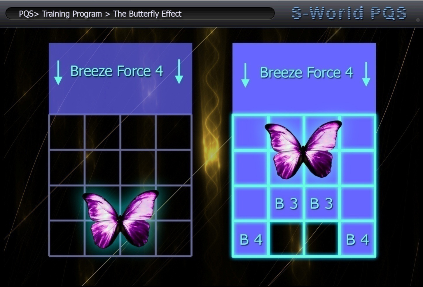 training-program-the-butterfly-effect