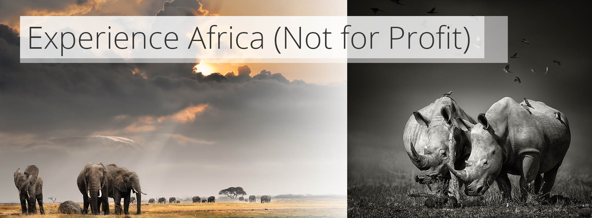 Experience Africa (Not for profit)