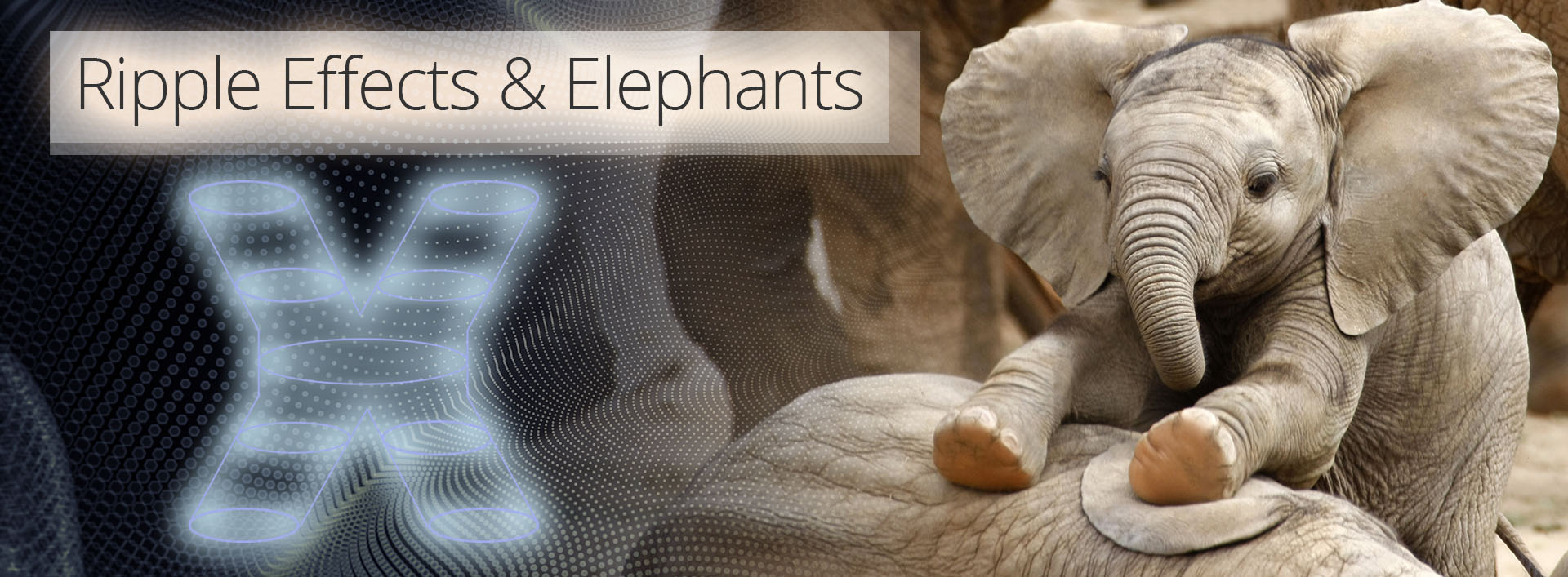 Ripple Effects & Elephants